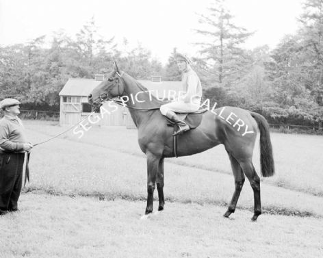 Racehorse Celina with Jockey Sandy Barclay
